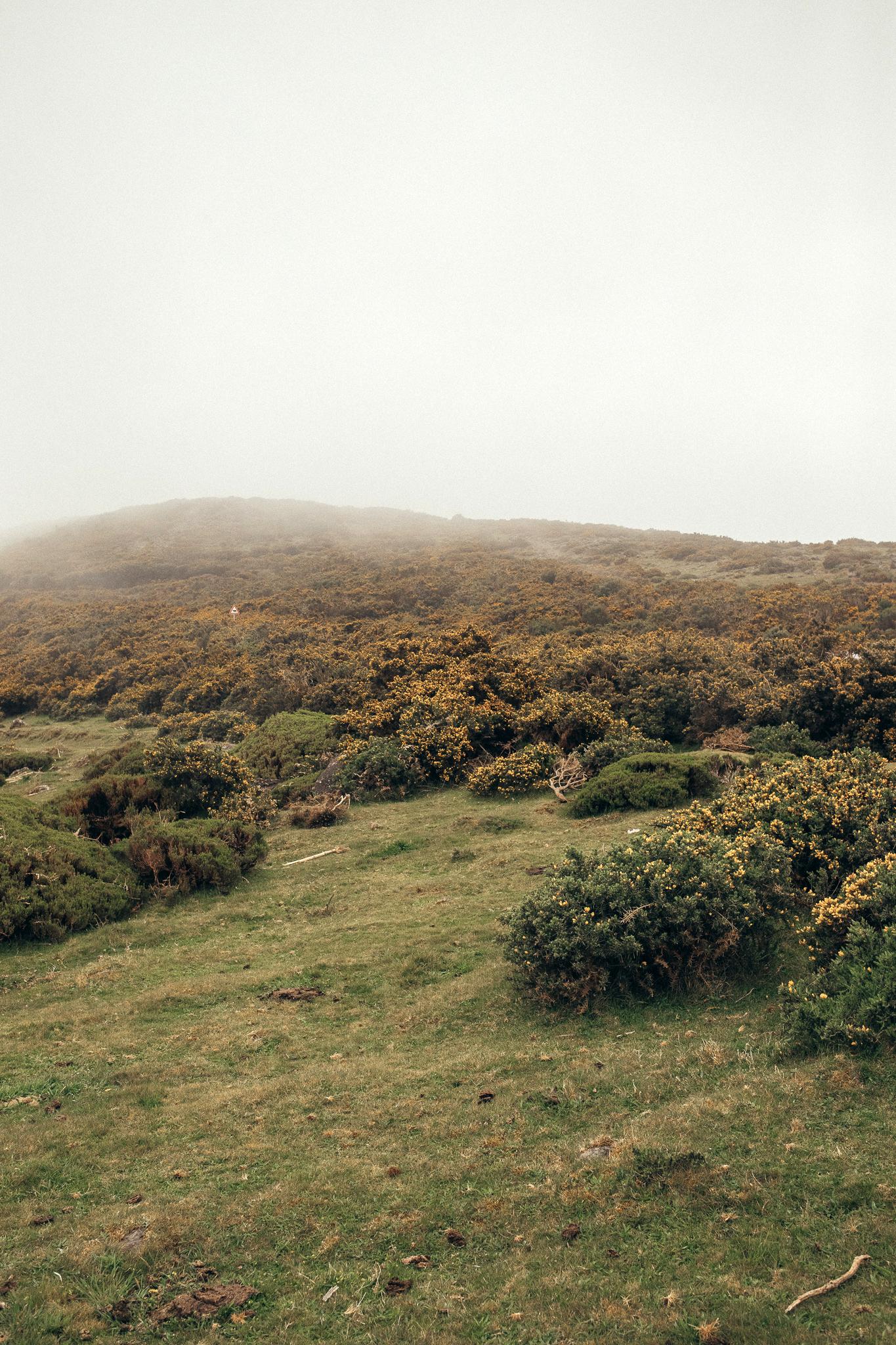 Madeira mist