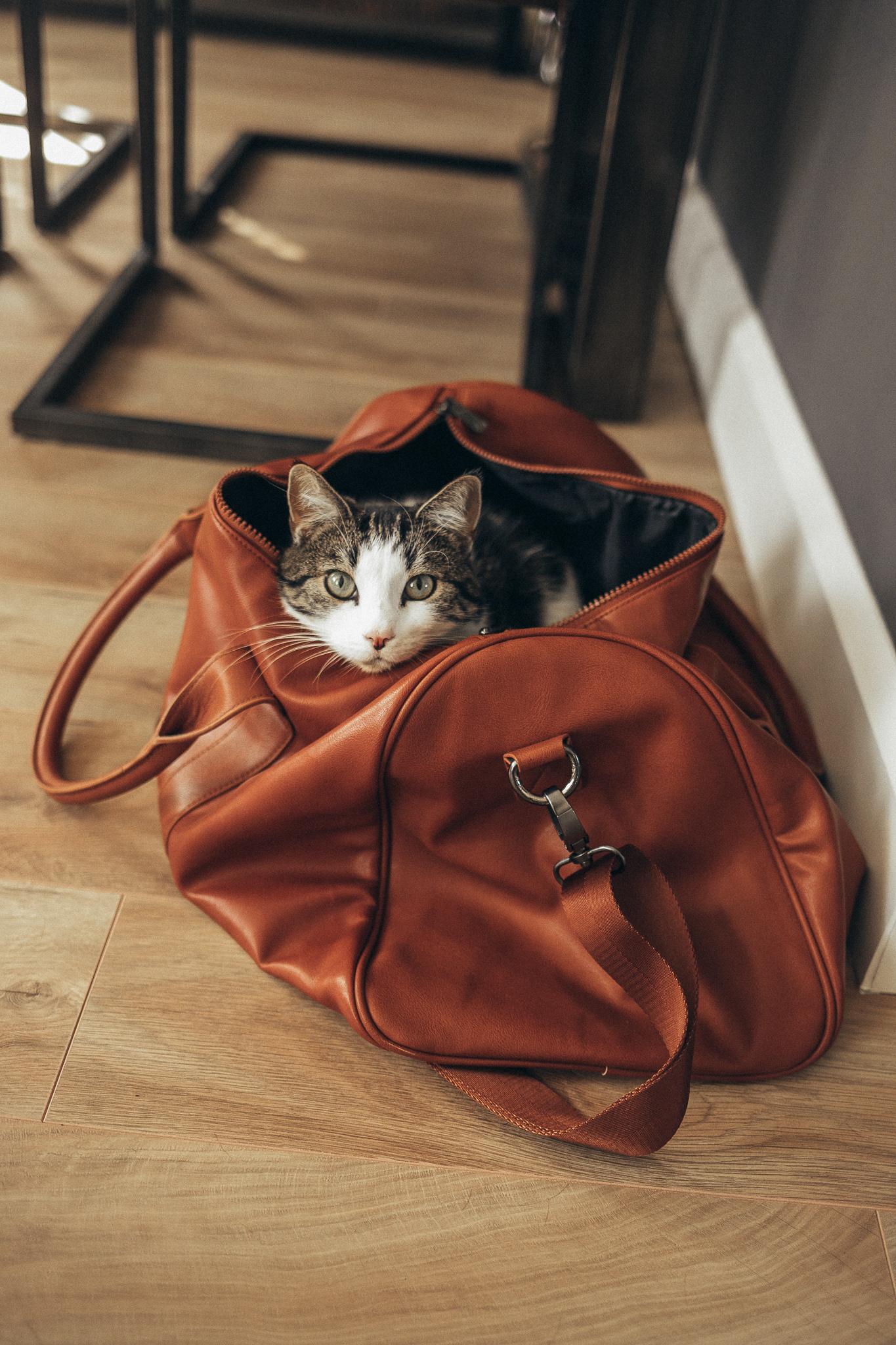 kat in een tas